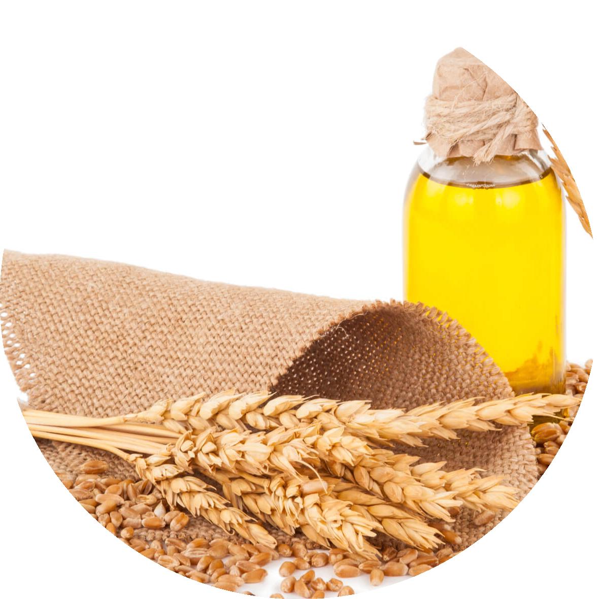 ulje pšeničnih klica