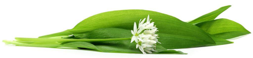 Sremuš biljka i njen cvet